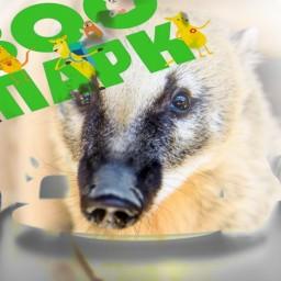 Обращение представителей иркутских зоопарков к президенту России