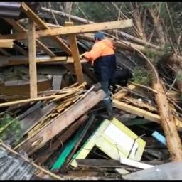 Лабрадор Клео ищет пропавших без вести во время паводка